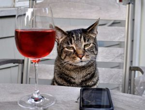 the-world_s-top-10-best-images-of-cats-drinking-wine-6
